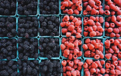 Flavonoid-rich foods could play important role in prevention of Alzheimer's